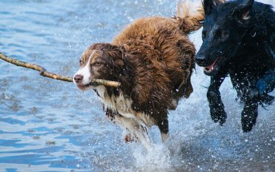 Top Parks Across the US that Cater to Canines