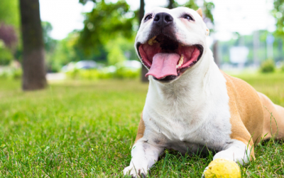 National Dog Day Encourages Rescue And Adoption