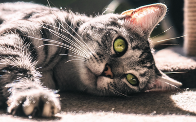 Claws Out! New York Leads States On Prohibiting Declawing