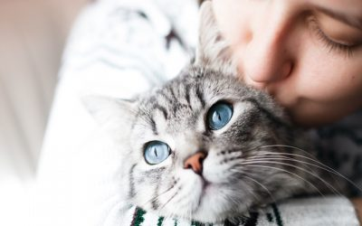 Study Finds That Cats Actually Do Bond with Humans