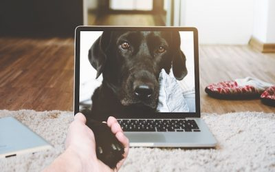"""Be the """"Cool"""" Parent with these Tech Gadgets for Pets"""