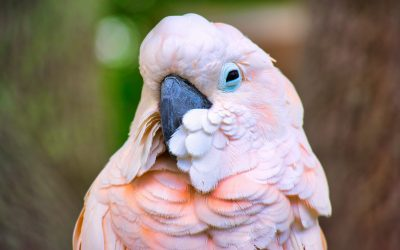 The Joy Of Welcoming An Exotic Bird Into Your Home