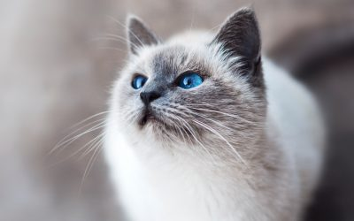 """HypoCat"" Vaccine is on the Horizon"