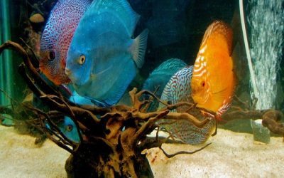 Five Exotic Freshwater Fish To Start Your Home Aquarium
