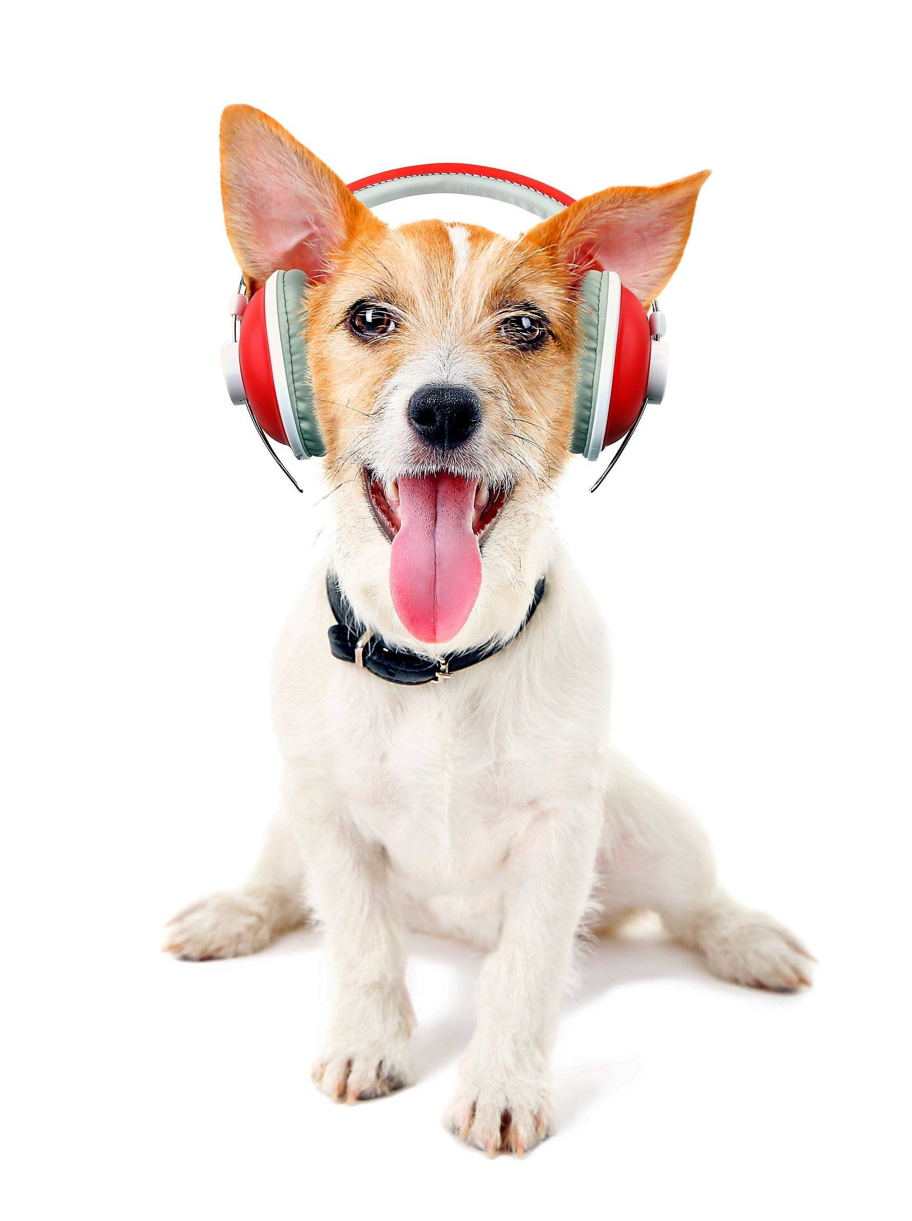 Pet Podcasts