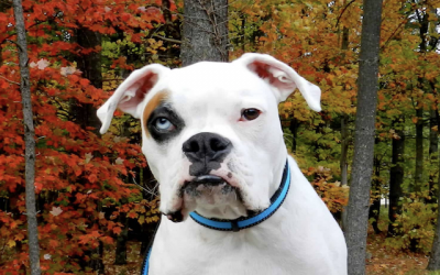 Deaf Dog Awareness Week: How To Live With A Deaf Dog