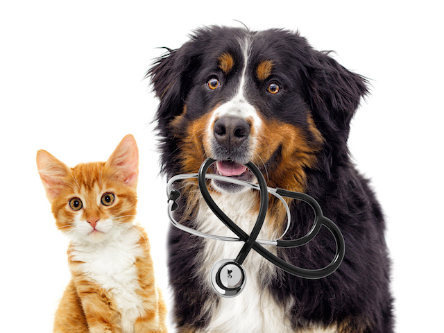 Ways To Help With The Cost Of Your Pet's Vet Care
