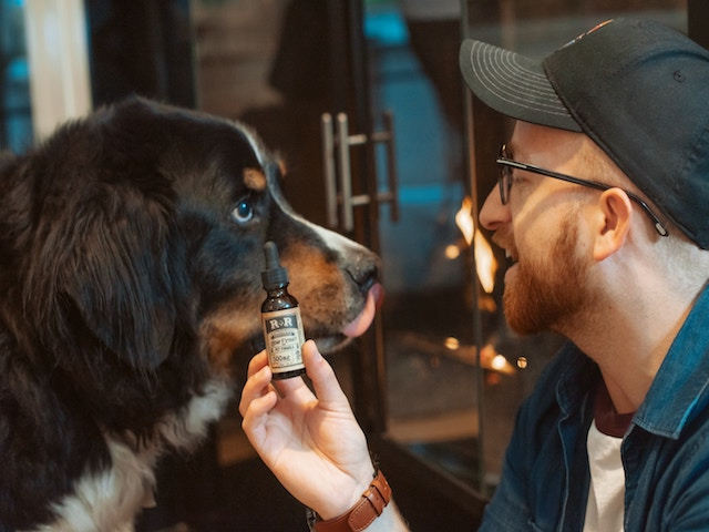 CBD for your D-O-G?